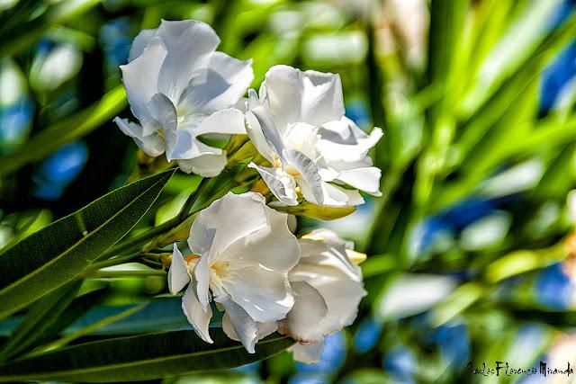 Ramillete con cuatro flores blancas