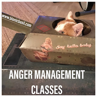 Angry Amber @BionicBasil® Bad Tempered Kitty - Anger Management Classes