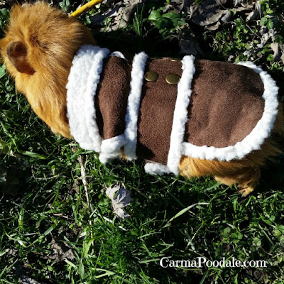 close up of Cinnamons coat