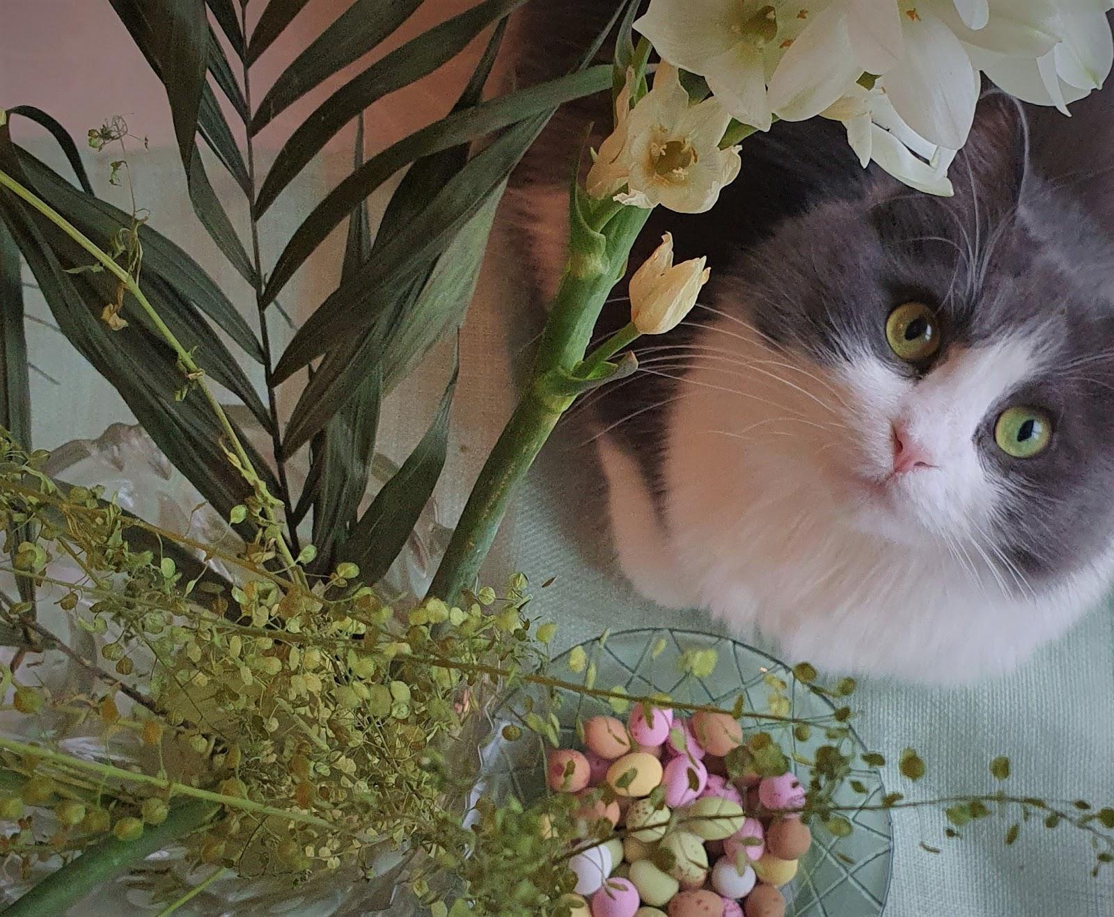 pääsiäismunat ja micu-kissa