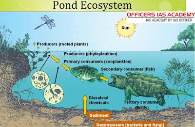 Lake and Pond Ecology - Limnology Basics