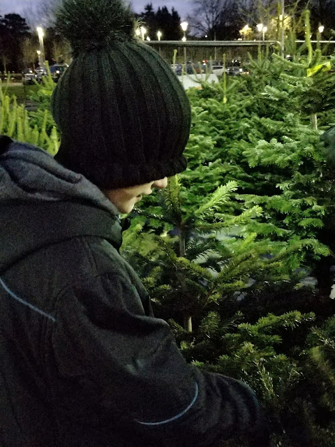choosing a Christmas Tree from Pines and Needles