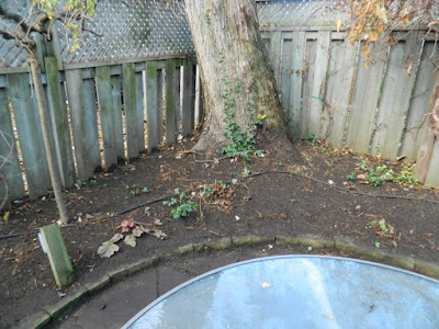 Coxwell Danforth Back Garden Fall Cleanup After by Paul Jung Gardening Services--a Toronto Organic Gardening Company