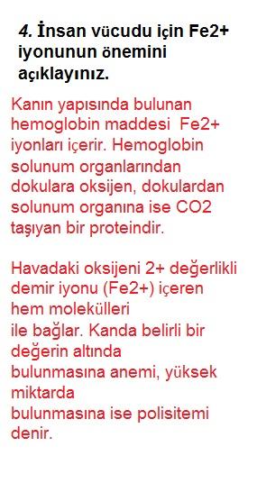 İnsan vücudu için Fe2+ iyonunun önemi