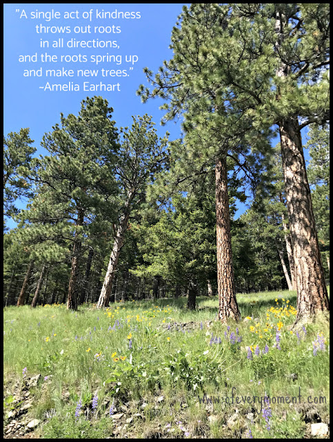 An Amelia Earhart quote about kindness on a photo of a pine forest