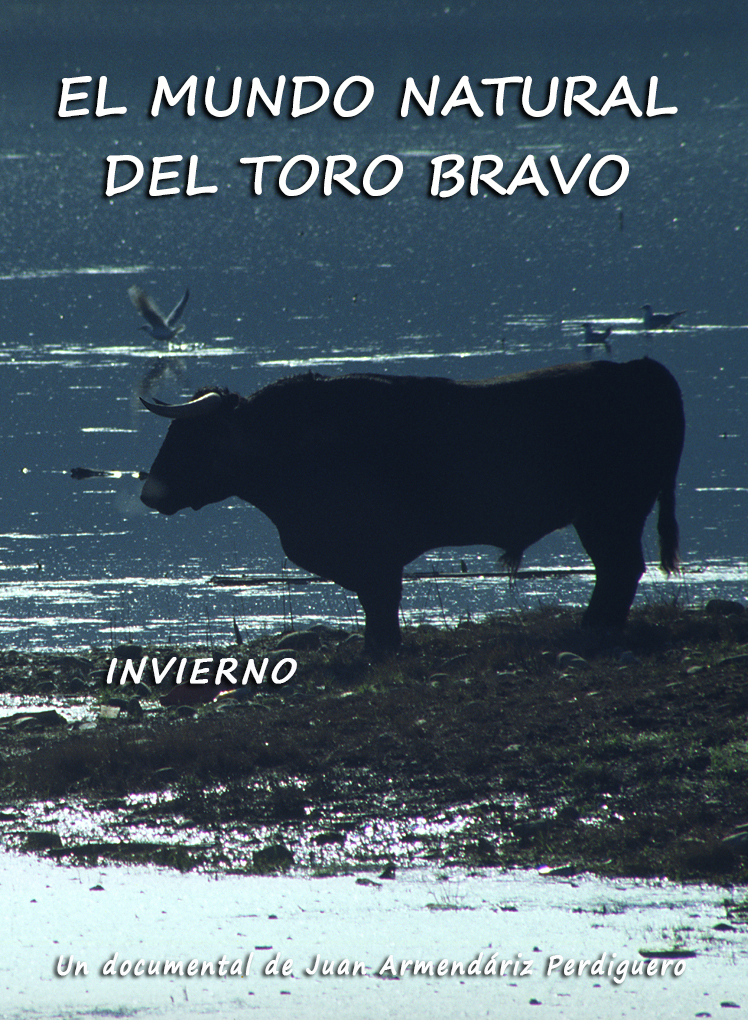 DOCUMENTAL. EL MUNDO NATURAL DEL TORO BRAVO. INVIERNO