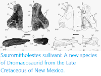 https://sciencythoughts.blogspot.com/2015/05/saurornitholestes-sullivani-new-species.html