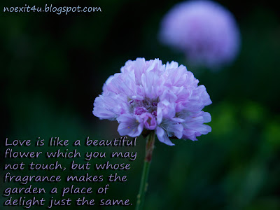 LOVE QUOTES FLOWER