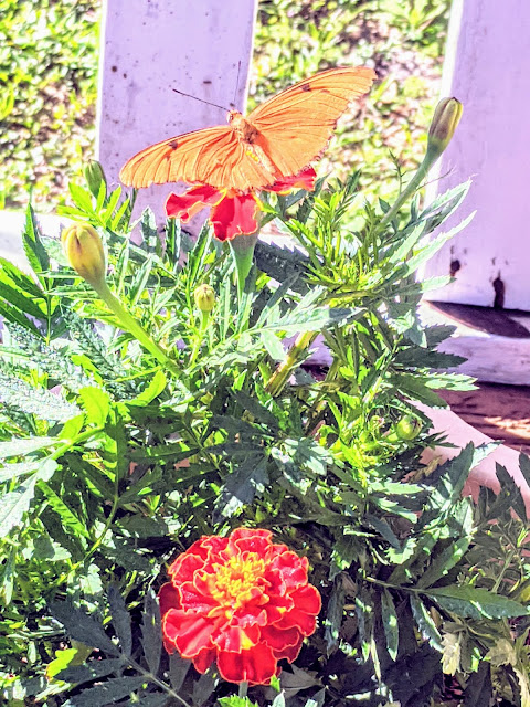 How to Start a Flower Garden - gardening and healthy living
