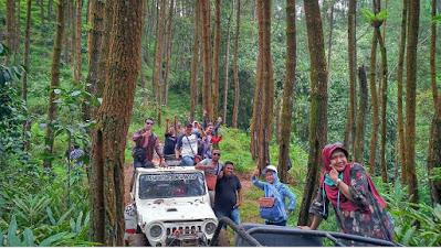 Hutan Pinus Nglinggo