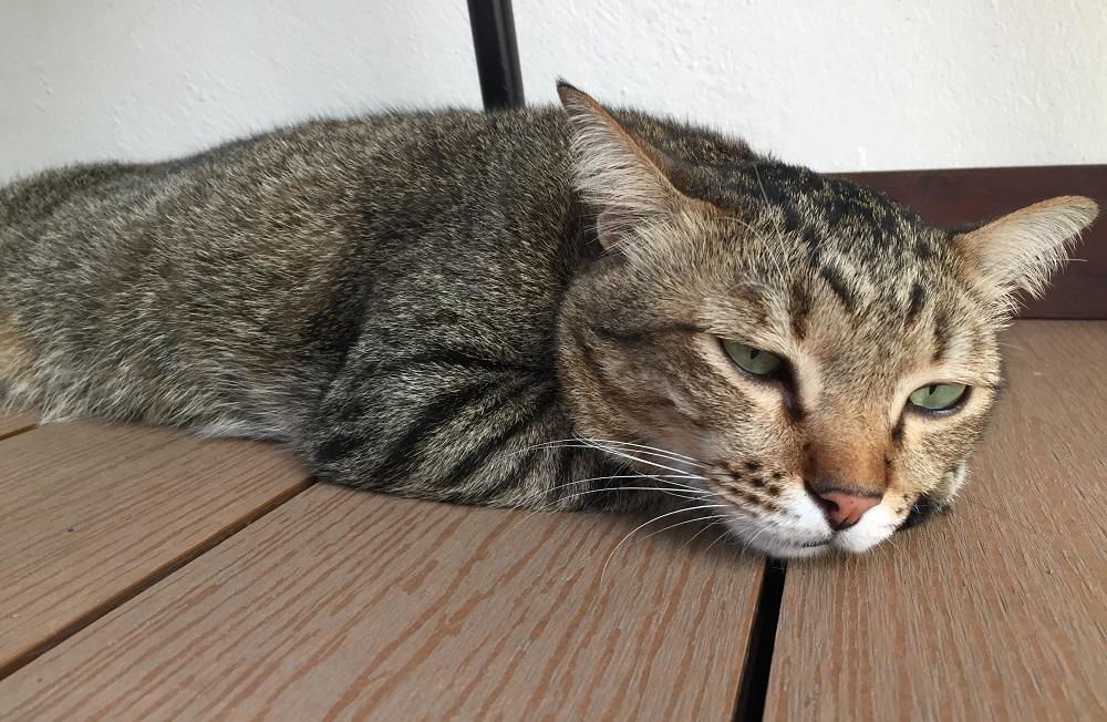 der postillon katze schlecht gelaunt weil sie heute nur 16 stunden geschlafen hat. Black Bedroom Furniture Sets. Home Design Ideas