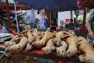 Aduh, China Tetap Adakan Festival Anjing walau Wabah Corona