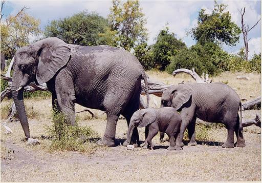 Un Lieutenant des « Eaux et forêts » tué par un troupeau d'éléphants à Blitta