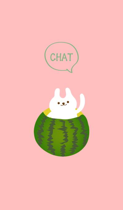 작은 흰색 토끼 옥 수박