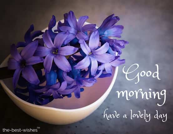 good morning pics with roses with hyacinth flower blue violet