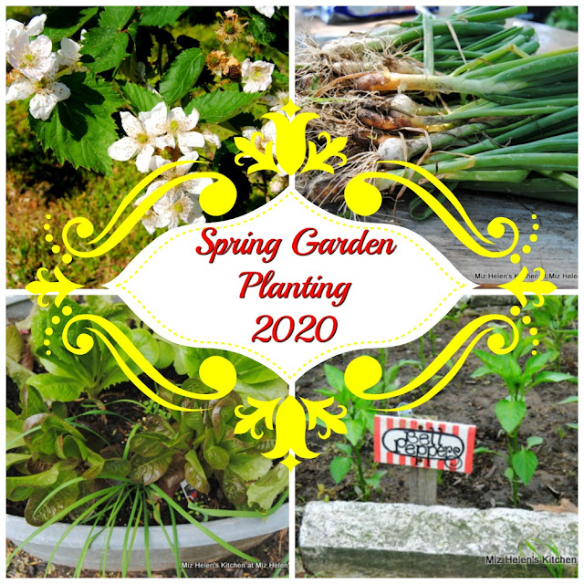 Spring Garden Planting 2020 at Miz Helen's Country Cottage