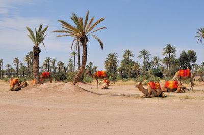 La Palmerie, Marrakesh