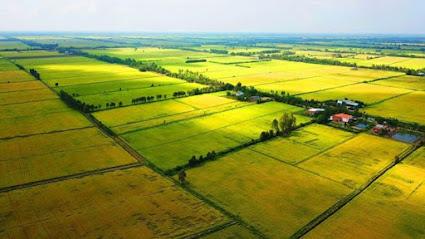 Vị trí địa lý và đặc điểm khí hậu tại Long An rất phù hợp để phát triển nuôi chim yến