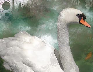 cisne detalle cabeza