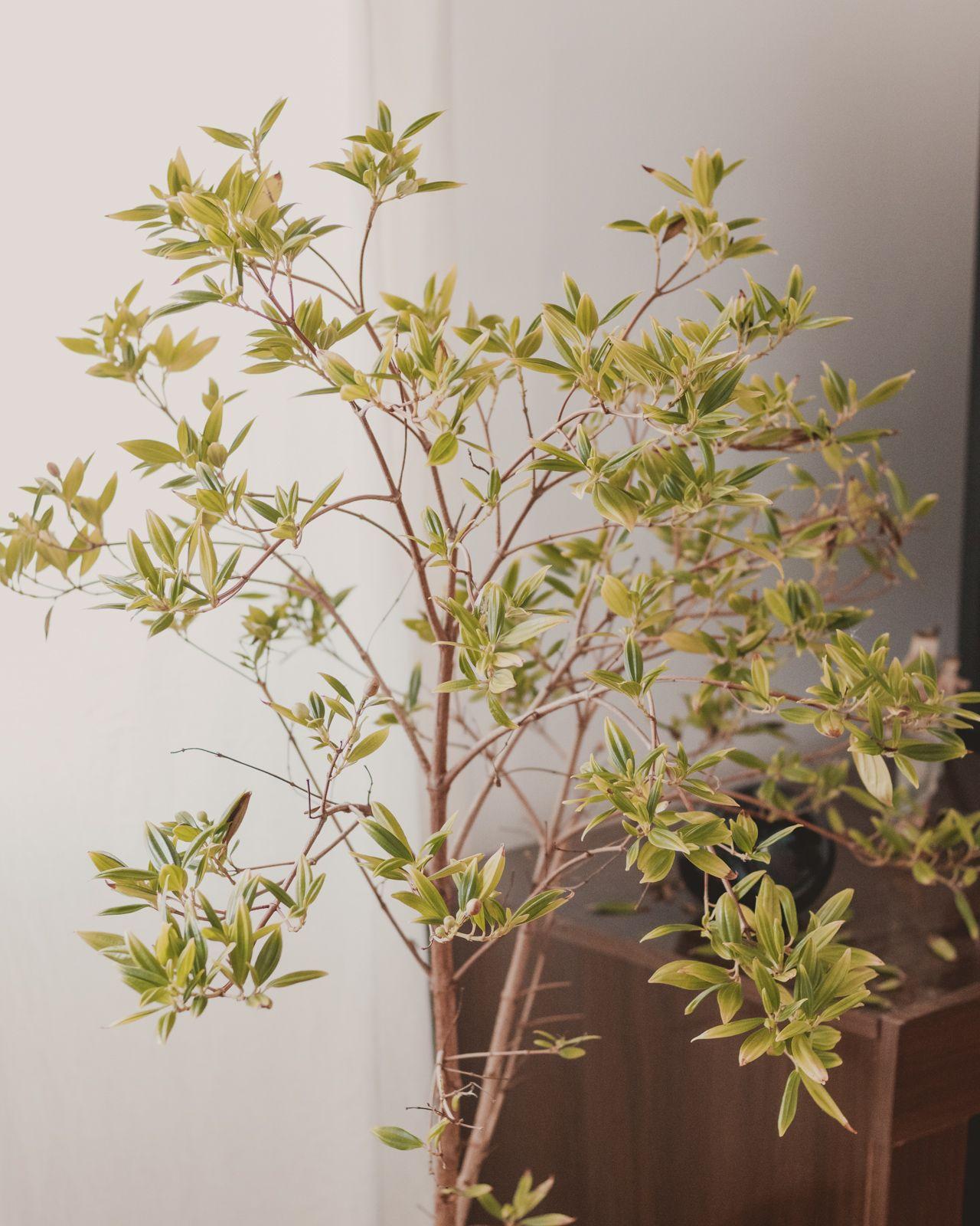 Adoradores de plantas | Houseplant jungle plantas na sala