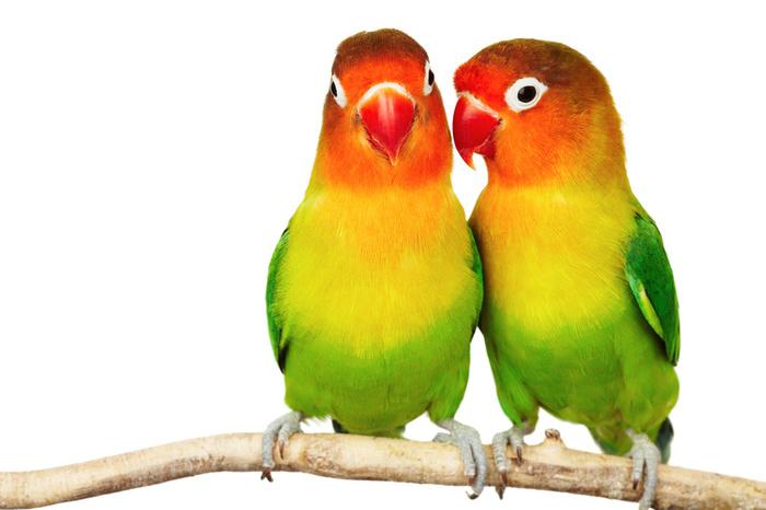 Love Birds Pictures Download: BEST GOOGLE IMAGES: Love Birds