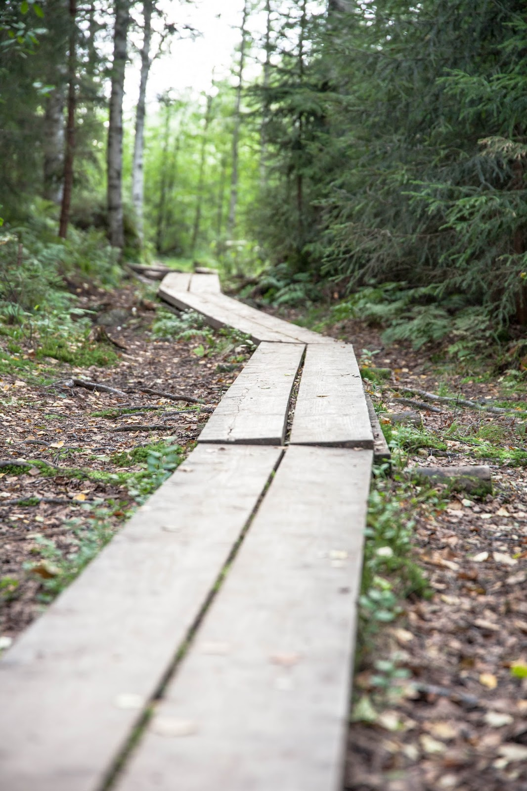 luonto metsä pitkospuut