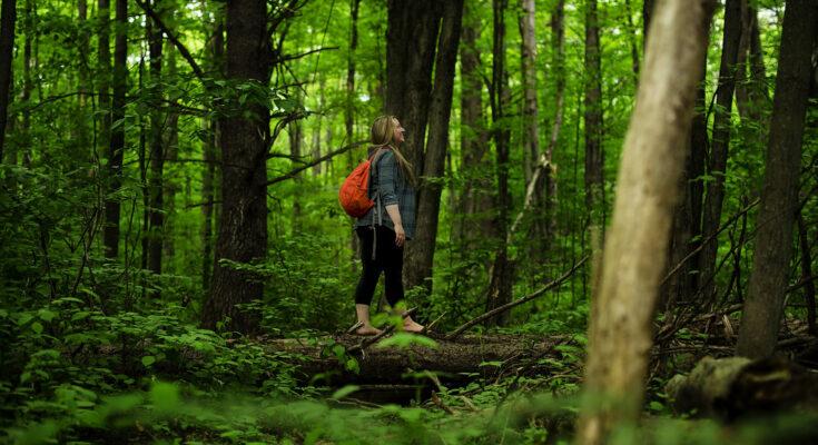 psihoterapija-šetnja-priroda