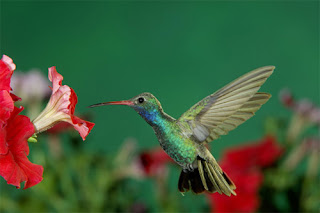 thuật toán hummingbird