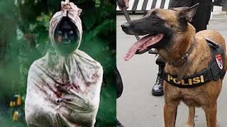 Viral Video Anjing Kejar Diduga Pocong, Polisi Turun Tangan