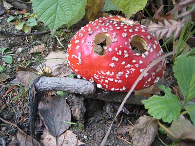 e278802899e Fun with fungi  April 2013