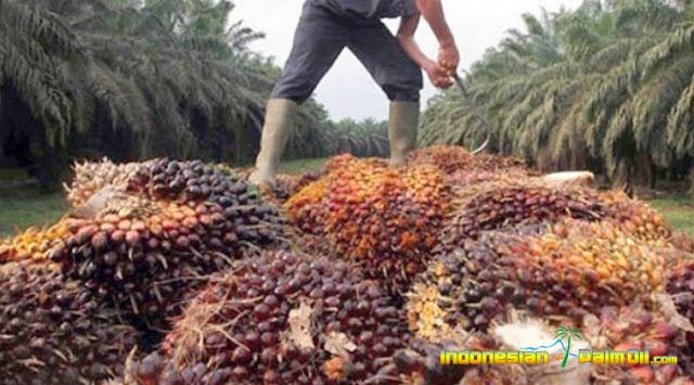 GAPKI Incar Pasar Afrika Dan Eropa Timur Untuk Perluas Ekspor CPO