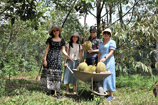 Mới có bốn chị em oanh tạc vườn sầu mà trái trong vườn đã cạn dần