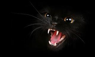 japao-registra-1-morte-humana-por-virus-transmitido-por-gato