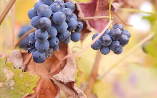 vino-rioja-denominacion-de-origen-cata