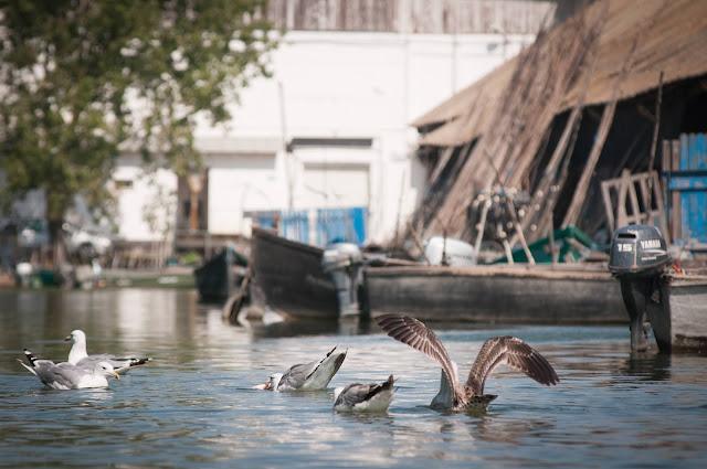 Pescarusi la Jurilovca
