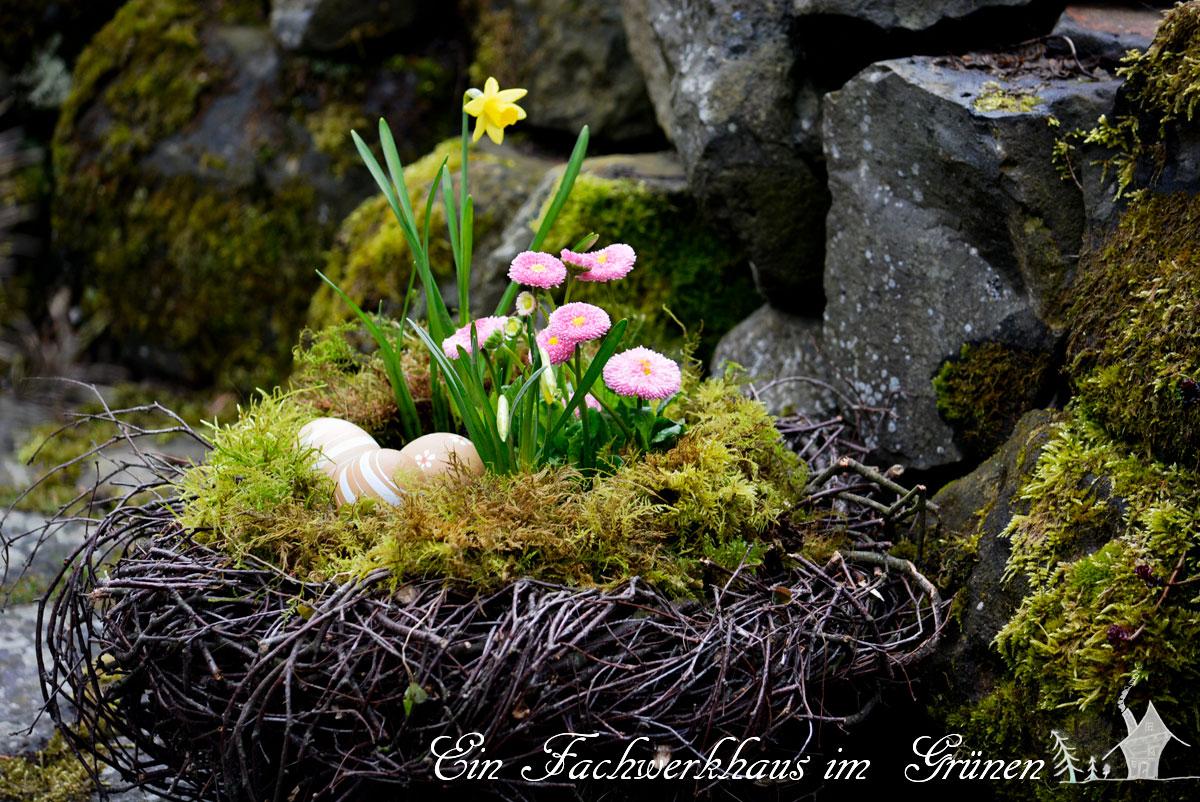 Gaensebluemchen, Tausendschoen, Bellis, Gartenblog