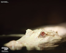Animal Cognizance Amazing Of