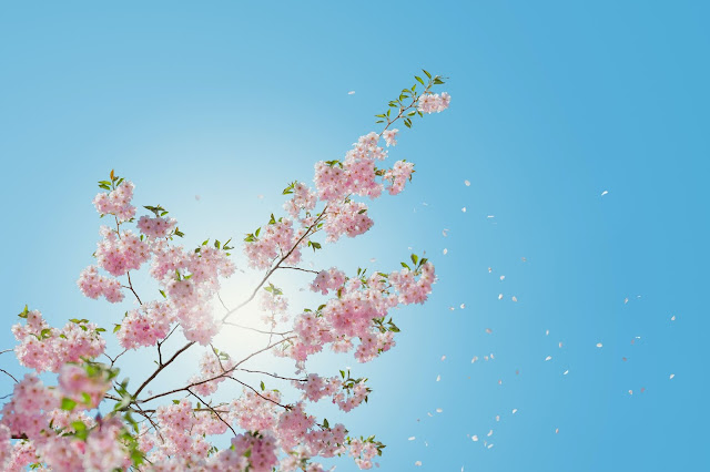 Sunshine through blossom:Photo by Anders Jildén on Unsplash