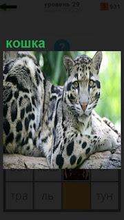 на дереве сидит красивая пятнистая кошка, хищный зверь