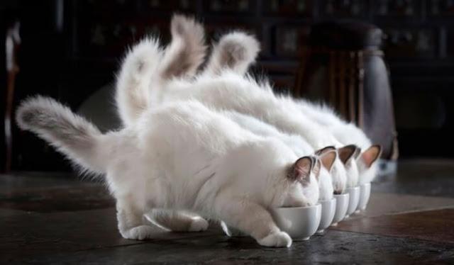 Perawatan Kucing Mahal, Ini Cara Hemat yang Bisa Dilakukan
