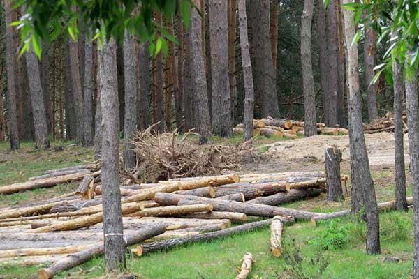 Paragraph on Deforestation