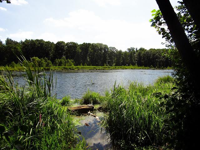Nadleśnictwo Parczew, Leśnictwo Jedlanka, ścieżka edukacyjna