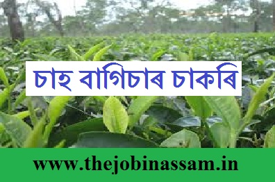 Job at Tea Garden in Assam 2020: Assistant Manager/Pharmacist/Technician/Trainee