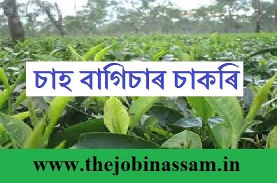 Tea Garden Recruitment 2019