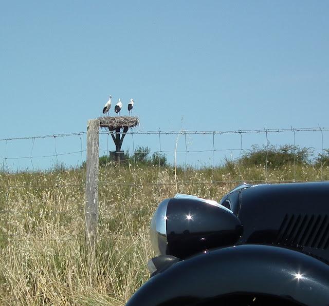 A stork nest, Charente-Maritime, France. Photo by Susan Walter.