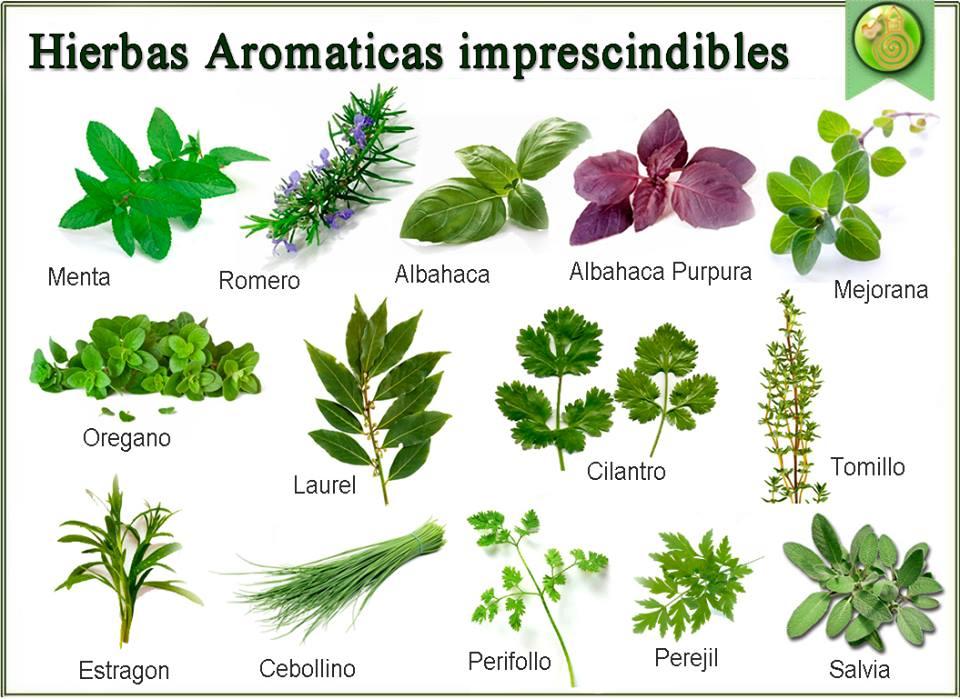 Mis recetas antic ncer hierbas arom ticas para generar - Cultivar plantas aromaticas en casa ...