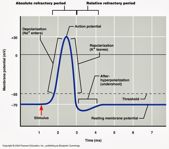 Human Medical Physiology
