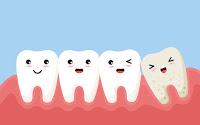 mammals have teeth