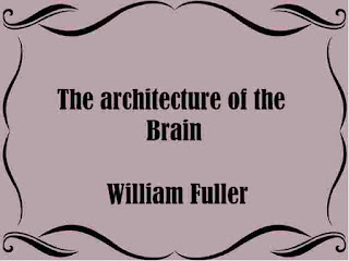 The architecture of the Brain