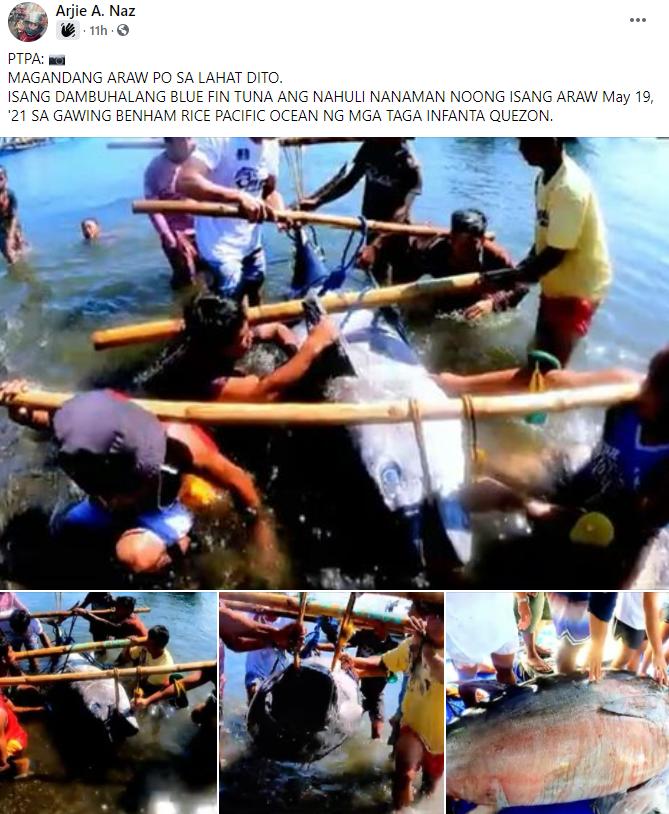 20-taon Gulang na Binata, Nakabingwit ng Dambuhalang Blue Fin Tuna | City Servants